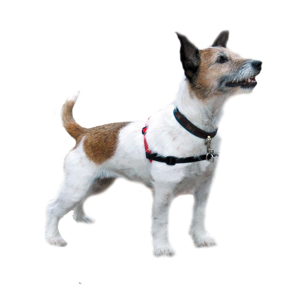 Halti Harness For Dogs Halti Harness Small Fin And Fur